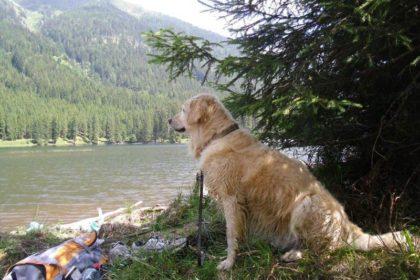 Hund von Evelyne Schörkmayer, Obdach