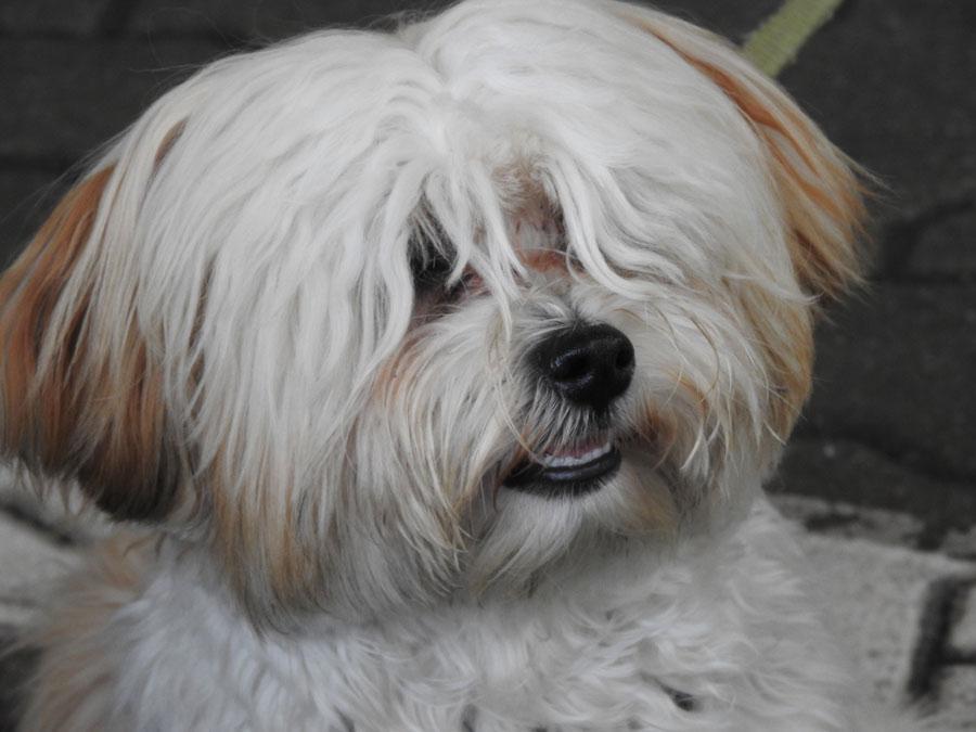 Testimonial Erfahrungsbericht - Langhaarhund