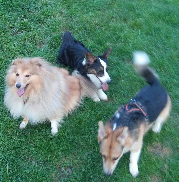 Hunde von Manuela S. aus Tirol
